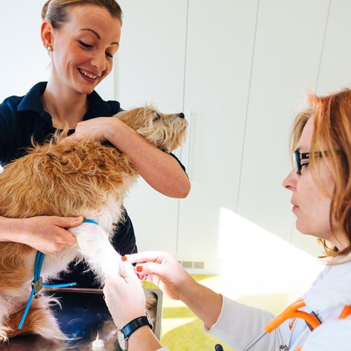 Hund wird beim Tierarzt an der Pfote behandelt